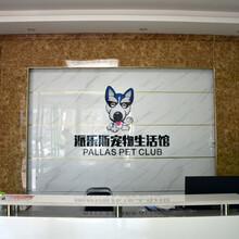 派勒斯宠物加盟宠物美容宠物医疗宠物用品