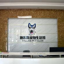 派勒斯寵物加盟寵物美容寵物醫療寵物用品圖片