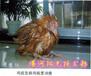 专治鸡呼吸困难丨鸡流鼻涕流眼泪丨鸡脸部肿胀脸有结痂