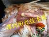 """供应""""支囊净""""方案?#34892;?#27835;疗鸡传染性滑液囊丨治疗青年鸡关节肿拉绿粪"""