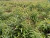 云南省迪慶州中藥材種植基地
