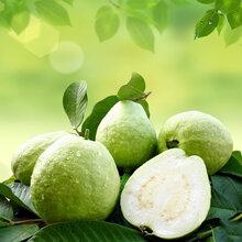 包邮廉江红橙10斤装原生态农产品(限廉江市区配送)