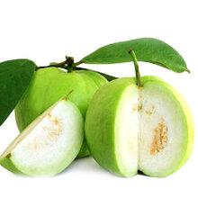 时令湛江水果特价包邮新鲜水果5斤装廉江番石榴(廉江生活圈)