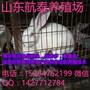广西肉兔市场行情广西养兔场伊拉肉兔养殖效益图片