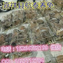 野兔价格现多少钱一斤安徽杂交野兔多少钱一斤安徽杂交野兔养殖场图片