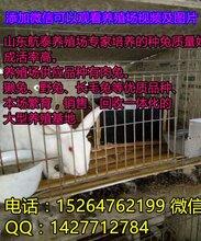 养500只种兔要投资多少钱河南獭兔养殖场利润分析