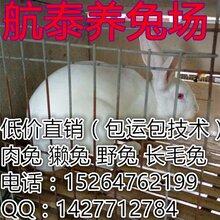 河北獭兔多少钱一斤?邯郸獭兔市场行情保定獭兔养殖效益