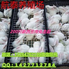 山西阳泉养殖獭兔赚钱吗怎么养好养吗