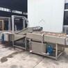 绿色食品小油菜冷却设备+新品+3500型+食品机械