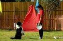 佛山宠物训练,佛山宠物寄养,佛山宠物服务-雷盛训犬学校直得推荐图片