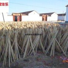 拖把杆拖把木杆拖把杨木轴木杆供应批发木杆批发
