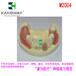 """供应""""康为医疗""""M2004种植练习模型种植模型,种植牙模型,口腔牙模型,牙种植模型"""