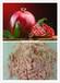 红石榴粉果粉厂家供应