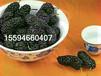 黑莓粉果粉厂家直供