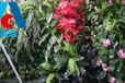 西安植物墙价格多少1829-2809-989西安仿真植物墙厂-金森造景