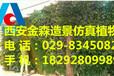 西安餐厅仿真树182-92809-989西安商场仿真树
