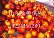 山东油桃产地大量批发油桃