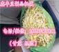 供应贵州豆芽机,豆芽机生产厂家,全自动豆芽机,无公害豆芽机