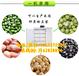 邯鄲豆芽機的價錢多功能大型豆芽機鑫豐全自動豆芽機視頻