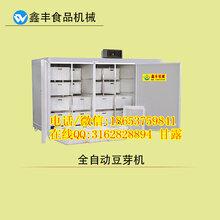 菏泽大型豆芽机设备鑫丰豆芽机简单操作豆芽机生产技术图片
