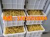 秦皇島豆芽機廠家,豆芽機價格,大型豆芽機