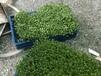 湖州智能箱式芽苗菜機價格