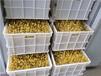 衡水自動豆芽機生產廠家價格
