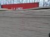 临沂杨木LVL单板层积材杨木多层板供应商