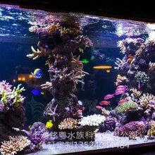 天津有机玻璃工厂承接大型生态超白玻璃景观水族箱鱼缸造景工程