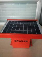 超声波驱鸟器厂家太阳能驱鸟器多种型号语音驱鸟器