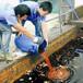 汕尾废油回收处理