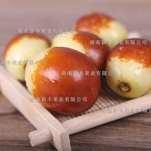 枣树苗供应图片