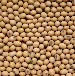 供应青岛港日照港进口精选优质大豆
