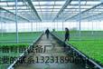 苗床网优质苗床网质量最好的苗床网生产厂家