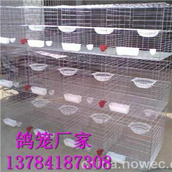 三层鸽子笼尺寸1.52米1.72米鸽笼鸽子配对笼厂家直销