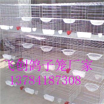 鸽子笼生产厂家飞创鸽笼三层鸽笼铁丝鸽笼
