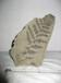 三叶虫化石怎么鉴定化石能交易么化石哪里现金交易