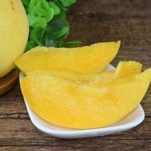2020年常德果园基地直销新品种黄桃苗图片