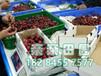 四川大樱桃苗基地提供2017大樱桃苗新品种