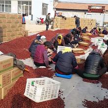 食品級紅棗廠家貨源加工用大棗批發價格圖片