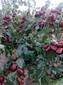 哪里可以批发到新疆特产和红枣?
