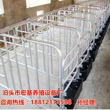 母猪限位栏价格复合定位栏育肥限位栏厂家直销图片