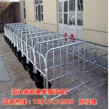供应宜宾限位栏厂家直销十个猪用定位栏尺寸齐全泊头宏基图片