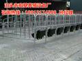 优质的母猪限位栏尺寸有哪些新型限位栏一套的价格最低多少钱图片