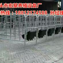 供应江苏母猪限位栏尺寸十头猪的定位栏价格优质母猪限位栏厂家直销图片