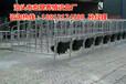 猪舍母猪定位栏尺寸母猪限位栏厂家报价泊头