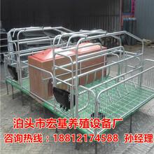 优质的母猪产床双体猪产床厂家直销首选泊头宏基图片