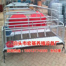 铸铁漏粪地板的双体猪产床尺寸猪用分娩床生产厂家泊头宏基图片