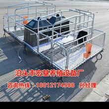 厂家供应南宁养猪设备批发母猪产床价格怀孕母猪专用栏双体猪产床批发报价图片