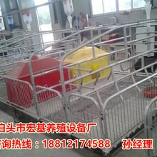 养猪设备专业生产厂家2.0厚的母猪产床出售猪产床尺寸大全图片